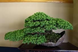 11/3 盆栽.png