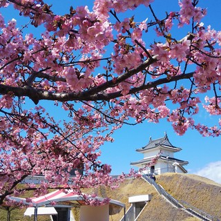 3/15 桜 城址公園.jpg