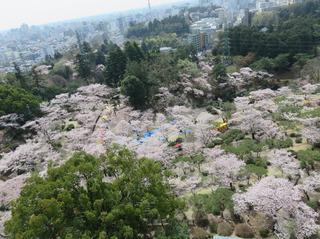 3/19 八幡山公園�A.jpg