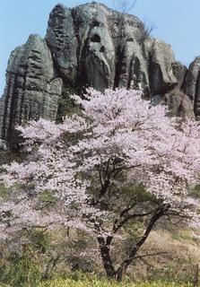 3/24 大谷の奇岩と桜.jpg