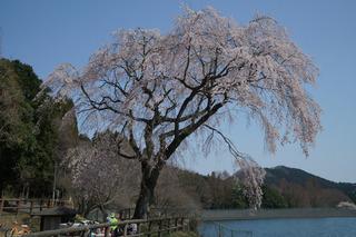 3/24 宇都宮森林公園.jpg