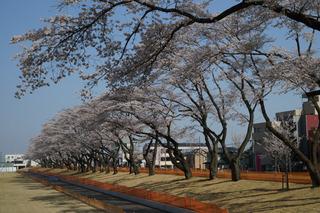 3/24 総合運動公園.jpg
