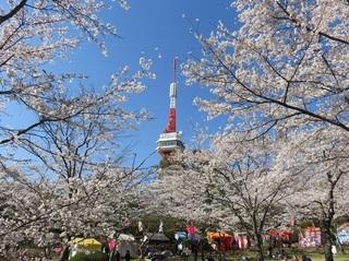 3/26 八幡山.jpg