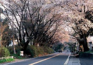 3/26 日光街道.jpg