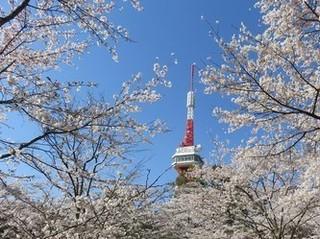 3/28 八幡山.jpg