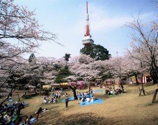 3/28 八幡山公園�A.jpg
