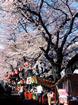 3/28 新川さくら祭り�A.jpg