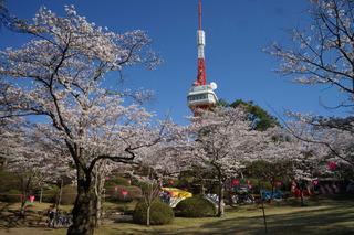 0324 八幡山公園.jpg