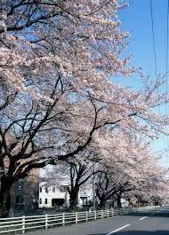 0324 新川.jpg