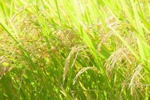 11/19 収穫祭.jpg