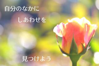 3/20 しあわせ.jpg