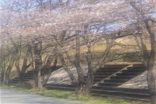 3/28 階段.jpg