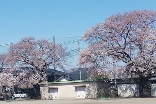 4/6 細谷小�E.jpg