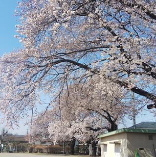 4/6 細谷小桜�C.jpg