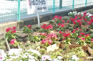 6/19 花壇 若3.jpg