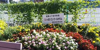 8/26 花壇審査�@.JPG
