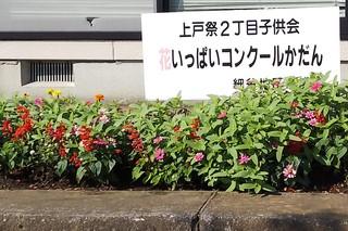 8/27 花壇 上2.jpg