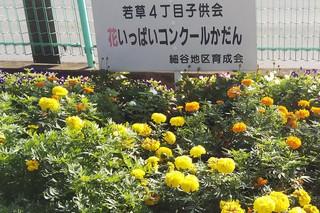 8/27 花壇若4.jpg