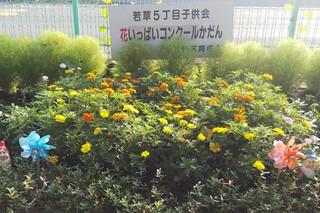 8/27 花壇若5.jpg