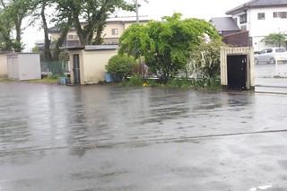 5/1 雨.jpg