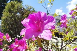 5/24 花と空➌.jpg
