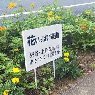 7/11 花いっぱい.jpg